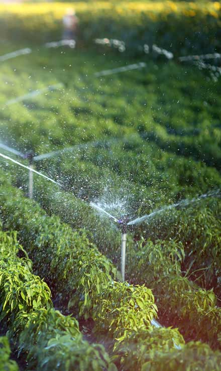 Marenco Lawn Sprinkler Inc Irrigation System Repair
